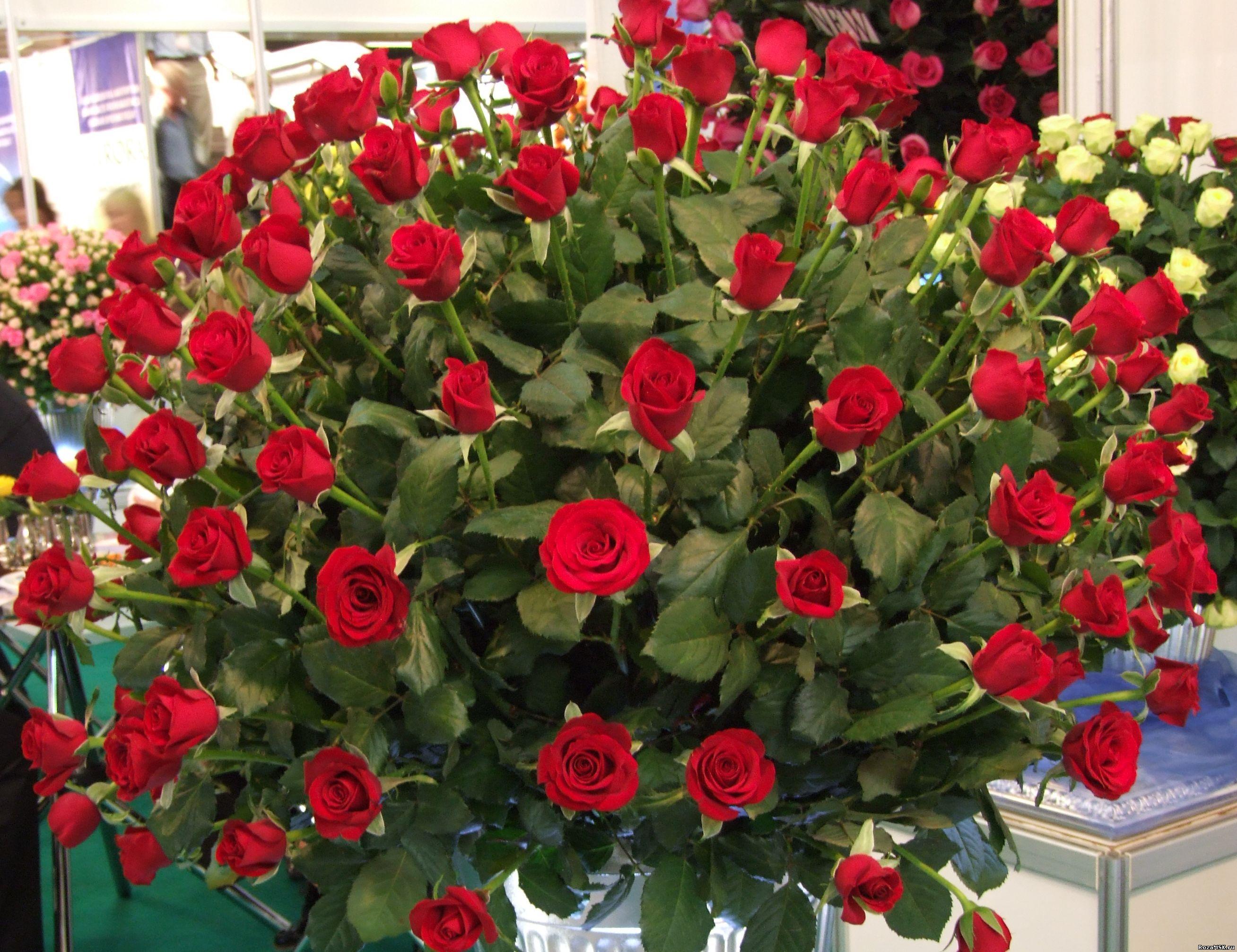 Цветы розы дешево от 35 руб за штуку